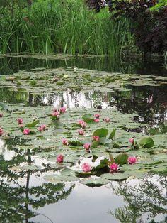 Monet's water garden. Claude Monet, Monet Garden Giverny, The Secret Garden, Pond Fountains, Pond Life, Lily Pond, Water Garden, Garden Pond, Aquatic Plants