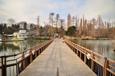 【リアルキ吉祥寺編】取材で何度も通った井の頭公園。季節は真冬。池の水を恨みたくなるほどの寒さでした。