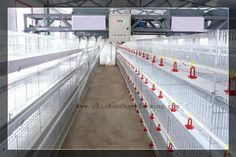 Chicken cages for layers Layer Chicken, Portable Chicken Coop, Chicken Cages, Baby Chickens, Quail, Coops, Layers, Building, Layering