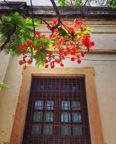 Chivato y ventana antigua.Asunción-Paraguay