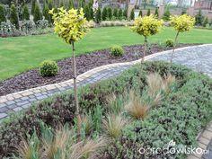 Zielonej ogrodniczki marzenie o zielonym ogrodzie - strona 656 - Forum ogrodnicze - Ogrodowisko