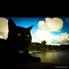 Black cat at the beach. RTN, Honduras