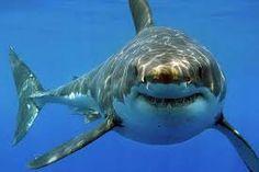 waterdieren in de zee - Google zoeken