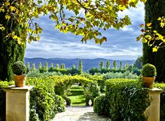 Beautiful leaves surrounding a winery in Provence, France.    #classyinthecity