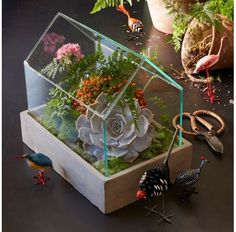 House Terrarium -This would look great at my desk at work!