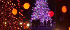A Longwood Christmas | Longwood Gardens