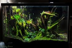 Terrascaping: Terrarium by Justin Grimm This guy makes the most beautiful terrariums around