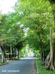 Jl.Rimba Karya, Madiun Country Roads, City, Plants, Flora, Plant, Planting