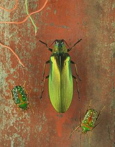 Jo Whaley: Fine Art Color Photographs of Insects,blending Natural History with Environmental concerns. Natural World, Natural History, Gcse 2017, Butterfly Art, Butterflies, Photography 2017, Used Cameras, T Art, Masks Art