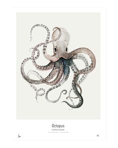 Ocean // Octopus Watercolor painting printed on 250 g. fine art photo paper. Limited edition of 300. Signed by artist with handwritten numbering. SHIPPINGThe art print is sold unframed and carefully packed and shipped in a cardboard tube to avoid damage during shipping.Fits perfectly into Ikea's RIBBA frame.