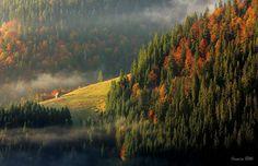 Thin Fog Traveling Through The Apuseni Mountains | Romania | Photo by Stan Cosmin Ovidiu