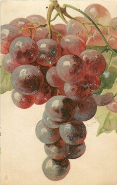GRAPES reddish purple