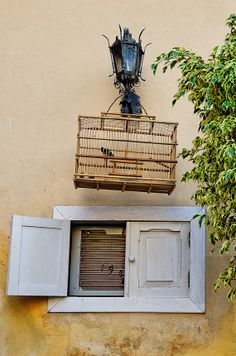 Fine art photographic print (restaurant still life, bird in wooden cage) Havana, Cuba