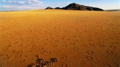 The eastern edge of the Namib-Naukluf National Park is home to the Namib Rand Natural Reserve. The many habitats, including sandy plains and mountains, allow various animals to thrive. In this aerial view, zebras run through the desert. (George Steinmetz/National Geographic Stock)