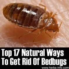 Top 17 Natural Ways To Get Rid Of Bedbugs ►► http://www.herbs-info.com/blog/top-17-natural-ways-to-get-rid-of-bedbugs/?i=p