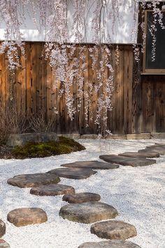 yuikki:  本満寺の枝垂れ桜 l GenJapan1986