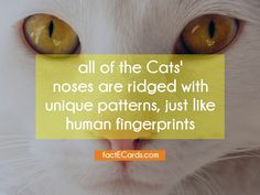 all of the Cats' noses are ridged with unique patterns, just like human fingerprints - http://factecards.com/all-cats-noses-ridged-unique/