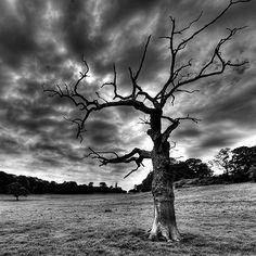 Dead tree. Beautiful picture