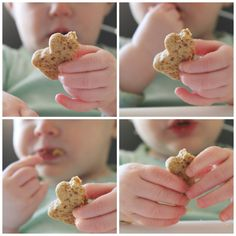 teddy cookie healthy snack for babies and toddlers  Bake for you baby today! Quick easy recipe; gluten free, dairy free, refined sugar free. #healthysnack #babyledweaning
