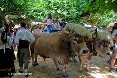 El Mercau Astur de Porrua - Fiestas de Asturias. Fiestas Populares y Tradicionales de Asturias. | Eventos y fiestas de Asturias | desdeasturias.com