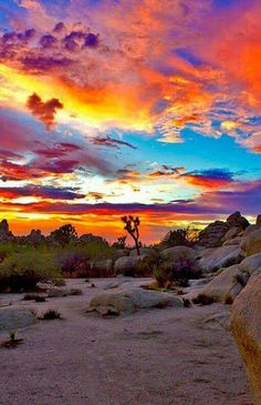 Beautiful sunset in Joshua Tree National Park, California! Beautiful World, Beautiful Places, Stunningly Beautiful, Beautiful Sunset, Nature Landscape, California National Parks, California Usa, Land Of Enchantment, Parcs