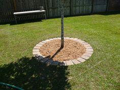 Brick Stone Around Trees Need To Do It The Three Huge In Back Yard