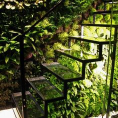 A glass staircase and living wall in Patrick Veillets Paris studio. Designed by Vertical Gardens Patrick Blanc. Stairway To Heaven, Dream Garden, Home And Garden, Herb Garden, Inside Garden, Hidden Garden, Garden Cafe, Garden Studio, Garden Living