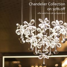 Striking balance of scintillating light and beautifully shaped crystals co join to create this masterpiece! Chandelier collection by Elvy, now at 10% off till 30th September. Shop online or at the stores to bring home this beautiful collection and avail 10% discount. ‪#‎Facebook‬ - www.facebook.com/elvylifestyle | ‪#‎Instagram‬ -https://instagram.com/elvylifestyle/ | ‪#‎Twitter‬ -https://twitter.com/Elvy_Lifestyle | ‪#‎Pinterest‬ -https://www.pinterest.com/elvylifestyle/ 0124-4578888…