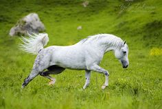 """Better than mountains can be only horses.  Stallion Onslaught, CB """"Orayda"""", KCR, seminar E.Druz"""