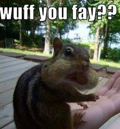 Cute little squirrel  :)