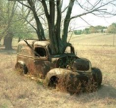 Tree growing through a old vintage car