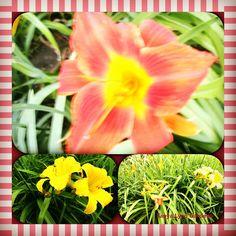 Tanya Lynn Photography  Special Garden Print $150.00