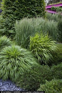 Grasses and pine