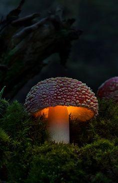 mettre dans les champignons autour de sa maison afin de pouvoir se guider dans les rues de la forêt.