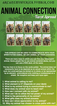 Animal Connection Tarot Spread. #Tarot spread found on Pinterest. More great tarot spreads (videos and downloads) coming soon on www.TarotAcademy.org