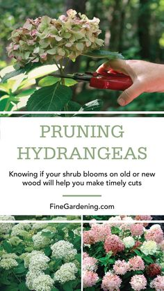 Hydrangea Care Discover Pruning Hydrangeas Knowing if your shrub blooms on old or new wood will help you make timely cuts. Garden Shrubs, Shade Garden, Lawn And Garden, Garden Plants, Garden Landscaping, Hydrangea Landscaping, Landscaping With Trees, Flowering Plants, Landscaping Design