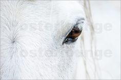 Andreas Kossmann - Eye of the horse