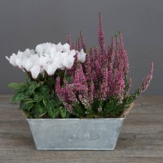 winter white cyclamen and heather planter by the flower studio | notonthehighstreet.com