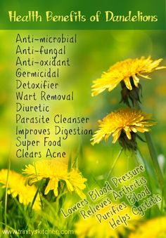 "Dandelion Health Benefits - follow the link for my full article ""All about dandelions  their health benefits"""