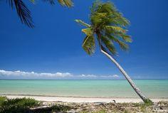 Praia do Patacho - Alagoas - Brasil