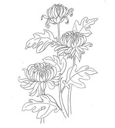 Раскраски красивые садовые цветочки хризантемы Pencil Drawings Of Flowers, Simple Line Drawings, Art Drawings, Botanical Line Drawing, Botanical Art, Chrysanthemum Drawing, Embroidery Stitches, Embroidery Patterns, Thread Painting