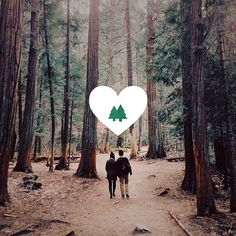Made with #photocandy @Photo Candy App  #love #nature #cute #sequoia #nationalpark