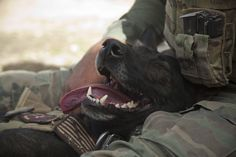 Wilbur, a Marine Special Operations Team member, takes a break with his handler after successfully sweeping a build site for an Afghan Local Police checkpoint in Helmand province, on March 30, 2013. (USMC/Sgt. Pete Thibodeau)