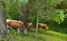 Kiva tarina vierailusta Retkipaikka blogissa Kili, Jurassic Park, Safari, Cow, Animals, Animales, Animaux, Cattle, Animal