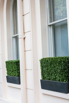 Artificial Boxwood hedge window box - could do without the artificial, but love the privacy and geometry