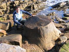 Roy Shepherd with a large fossil tree stump at Crail in the UK. - discoveringfossils.co.uk