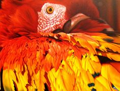GUACAMAYA  Cesar Plascencia´s photorealistic work portrays Mexico in a majestic manner. His art is full of texture, color and life. If you sometime wonder what your life could be in this country, it would be enough to take a glance at one of Cesar´s paintings to find out