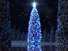 gif christmas animation | Christmas Tree Animated Wallpaper screenshot 1 - This wallpaper will ...