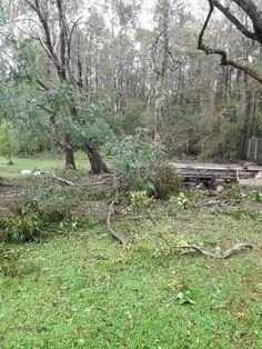 Hurricane Images, Back Home, Plants, Plant, Planets