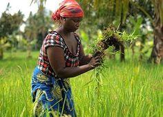 MadalBo: África podría alimentar al mundo entero, si tan so...